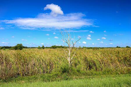 Green field with blue sky and white tree. Reklamní fotografie