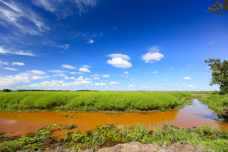 Muddy river banks with blue sky and green field.