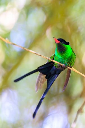 Beautiful hummingbird sitting on a branch in a garden, dancing. Reklamní fotografie