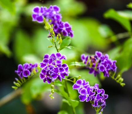 Purple tropical flowers with green leaves. Reklamní fotografie