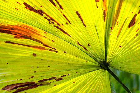 Green palm leaf with shadows at a tropical garden.