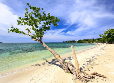 Tropical sand beach with tree at the Carribean.