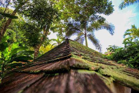 Stone pyramid roof at a green jungle.