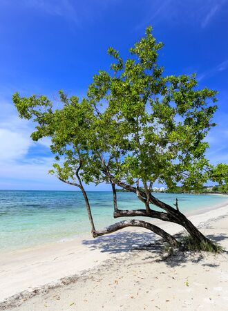 Tropical beach with a green tree on the sand.