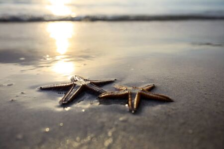 Two starfish on the beach at sunset, a romantic metaphore.