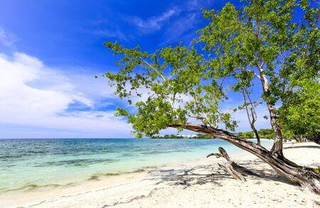 Tropical sand beach with a green tree, Carribean.