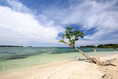 Tropical beach with a barren green tree and blue sky.