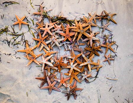 Lots of starfish on a sea beach.