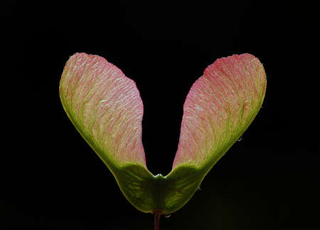 Heart Shaped Plant That Newly Blooming