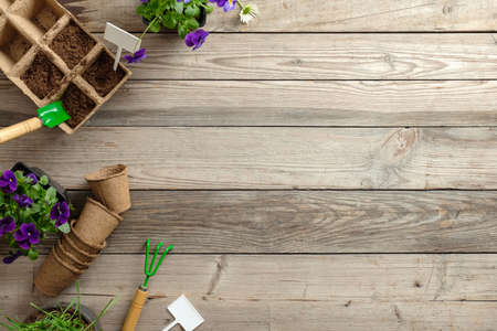 Frame of gardening tools, seeds, plants and pots on vintage wooden table. Spring in the garden concept background with free text space. Flat lay, top view, overhead.