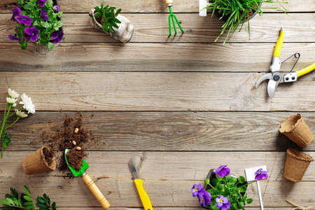 Gardening border with various flowers plant and garden tools on wooden background, flat lay, top view, copy space for text. Banco de Imagens