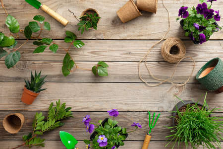 Gardening tools with various flowers plant in pot on vintage wooden background. Flat lay, top view.