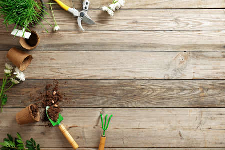 gardening tools, flowers, plant, pot, scattered earth, seeds on wooden background with copy space for text, flat lay composition, top view. Banco de Imagens