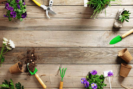 Gardening border composition with various flowers plant and garden tools on wooden background, flat lay, top view, copy space for text.