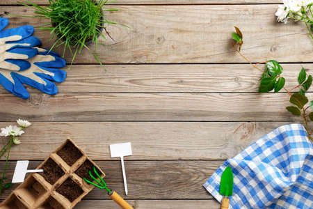 Gardening tools and plants on vintage wooden table, cultivation plant and gardening concept. Flat lay, top view, composition with copy space for text.