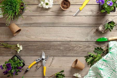 Gardening tools and flowers in pots on wooden table. Spring in the garden concept background with free text space (top view, flat lay).