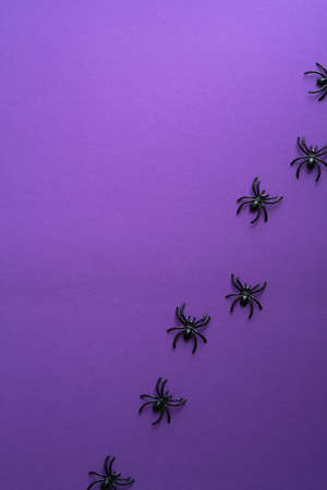 Minimal Halloween composition with spiders on purple background. Flat lay, top view, overhead.