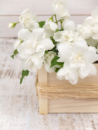 philadelphus coronarius: English dogwood bouquet in the wooden box on the white painted rough background