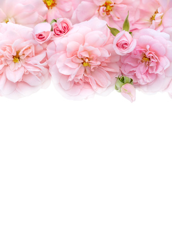 Pale pink roses bouquet on the white background