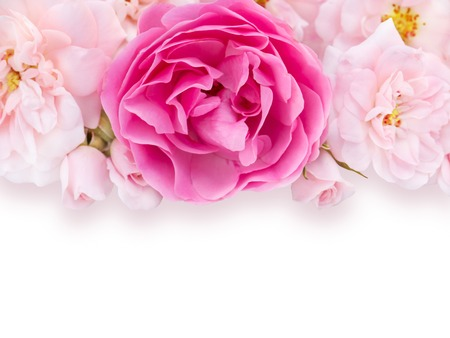 light and shadow: Bright pink and pale pink roses with light shadow on the white background Stock Photo