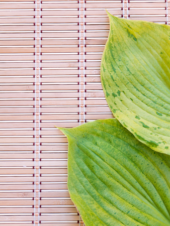 hosta: Two green hosta leaves with veins on the bamboo mat