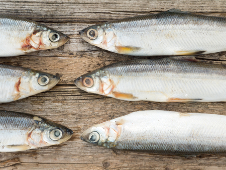 salmonidae: Vendace fishes on the old weathered wooden board