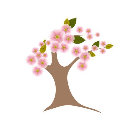 to bloom: Sakura tree in the full bloom