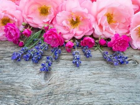 flower background: Pink curly open roses and provence lavender on the old weathered wooden board Stock Photo