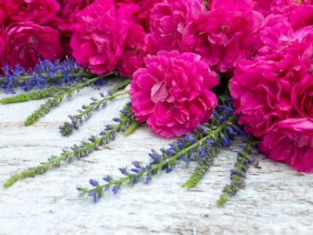 veronica flower: Deep pink double roses and veronica spicata on the white painted background Stock Photo