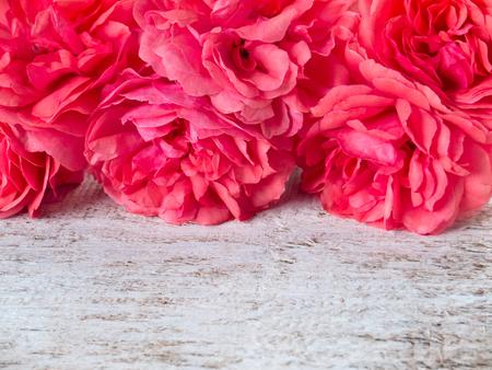 jardines flores: rosas dobles de color rosa en el fondo r�stico blanco