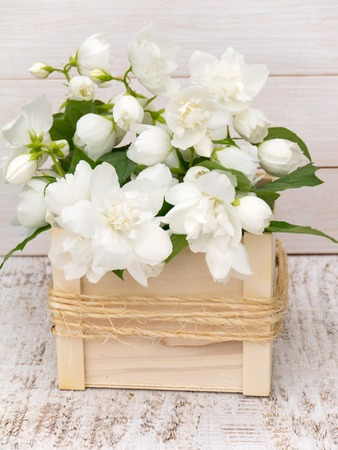 philadelphus coronarius: Philadelphus coronarius bouquet in the wooden box on the white painted rough background