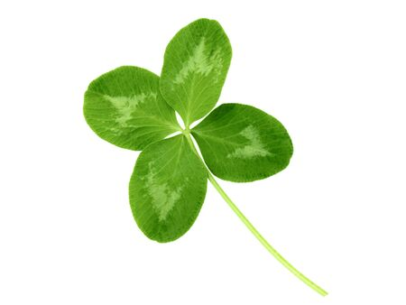 lucky clover: Lucky clover St Patrick Day irish holiday symbol isolated on white