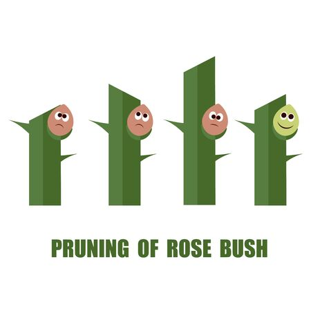 prune: Correct and wrong ways to prune rose bushes