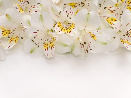 ecru: White and yellow alstroemeria flowers bouquet on the top of white background