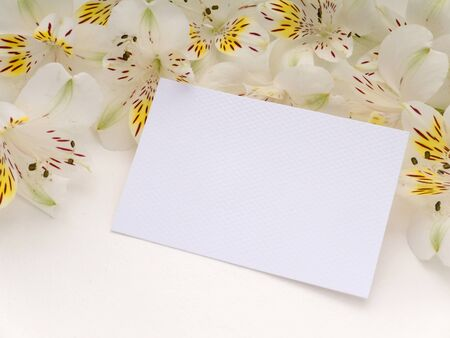 white textured paper: White textured paper greeting card with white alstroemeria flowers