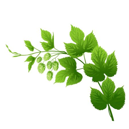 condiment: Hop branch with leaves and flowers vector illustration