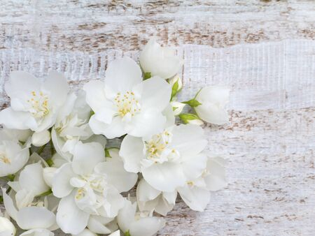 coronarius: White delicate flowers bouquet in the corner of the rustic background