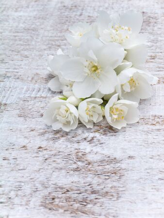 philadelphus coronarius: White English dogwood flowers bouquet on the wooden rustic background