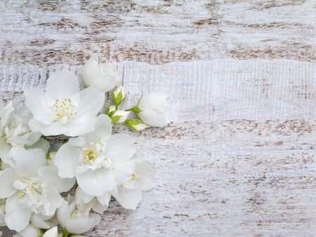 coronarius: White sweet mock-orange flowers bouquet in the corner of the rustic background