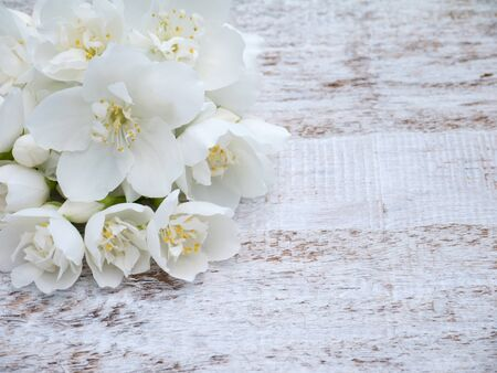 philadelphus coronarius: White English dogwood flowers bouquet in the corner of the wooden rustic background