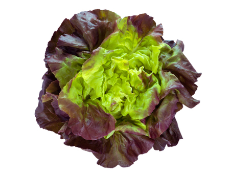 Purple green lettuce salad head top view isolated on white Stock Photo