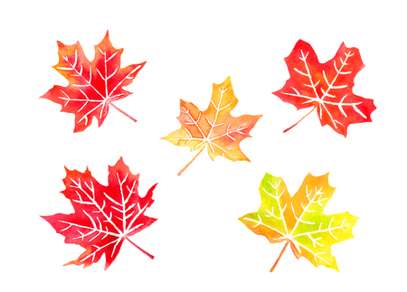 Autumn colored canadian maple leaves set watercolor