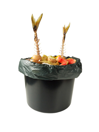 Separate garbage collection. Fish bones, vegetable peelings, egg shells and other organic waste in the black bucket and plastic bag isolated on white.