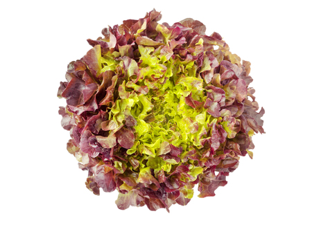 Red oak leaf lettuce salad head top view isolated on white