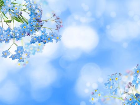 Niebieskie kwiaty niezapominajki lub myozotis w rogach rozmytego tła bokeh