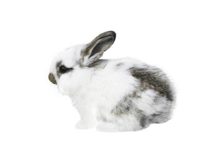 White little spotty rabbit isolated on white