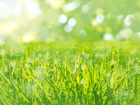 Sunny green grass meadow on the spring blurred background