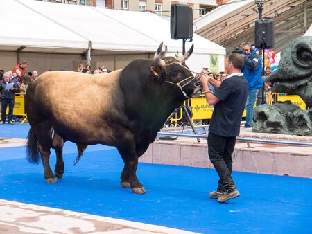 OVIEDO, SPAIN - May 12, 2018: Bull best in its breed at the Plaza Ferroviarios Asturianos in the city center on the Ascension Fair, Oviedo, Spain.