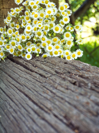 Daisy white yellow-eye flowers on the old weathered wooden log on blurred garden vertical background