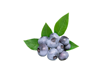 Blueberries and leaves isolated on white. Dusky blue wax coating on the berries. Foto de archivo